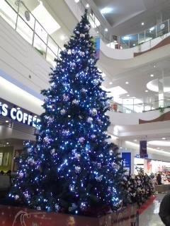 クリスマスツリーがきれいです。